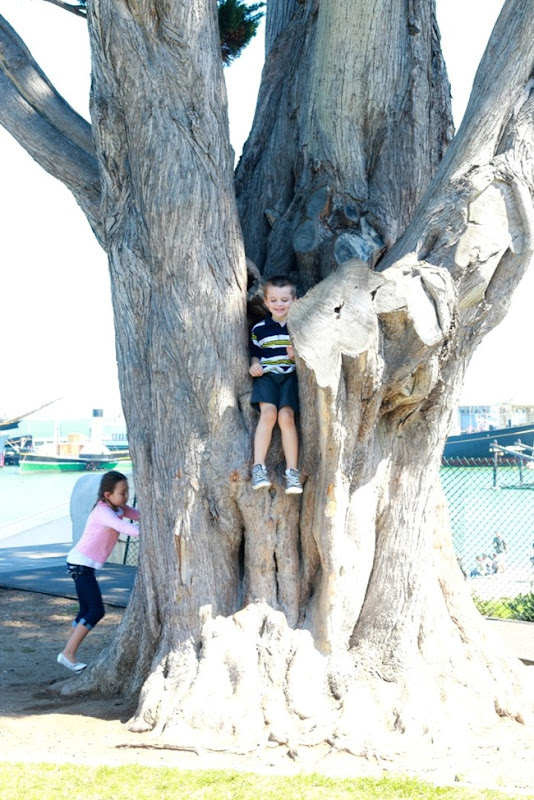 day2tree