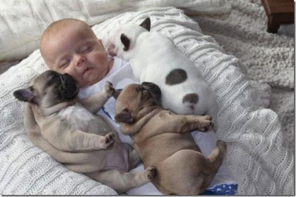 baby-bulldog-puppies-5