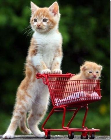 gatos_carrito
