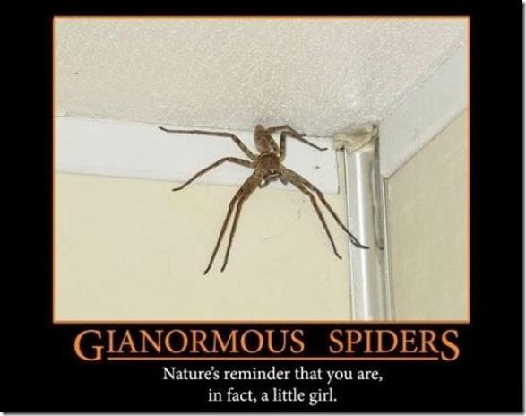 australia-scary-spiders-009