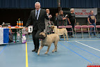 20130510-Bullmastiff-Worldcup-0669.jpg