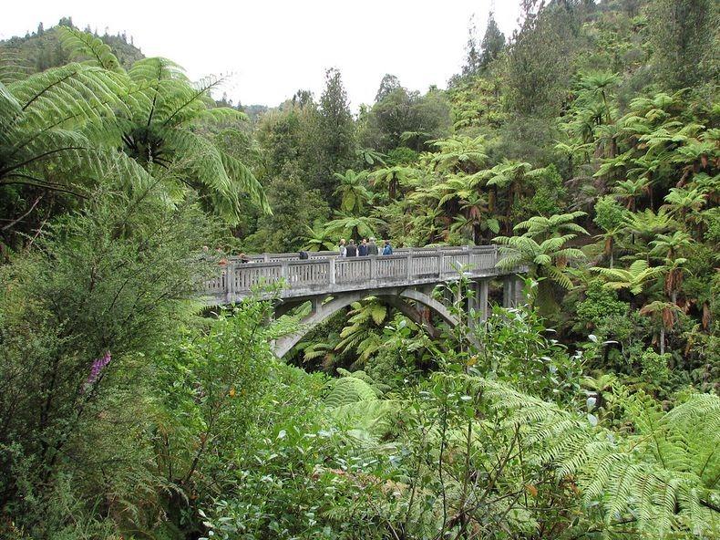 whanganui-bridge-nowhere-4