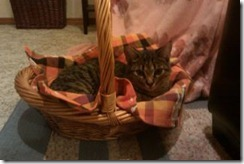 Missy in basket