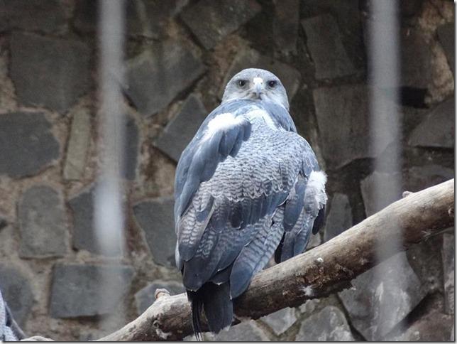 Santiago_Zoo_DSC03958