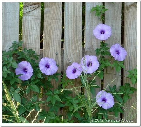 GardenEscP1030523