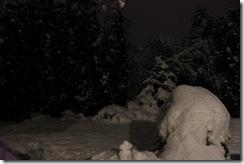 snowpocalypse  24