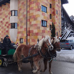 horses and carriage in Seefeld, Tirol, Austria
