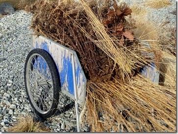 garden cart full of grasses and Achillea