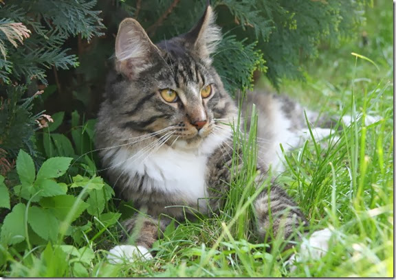 gatto-donatore2