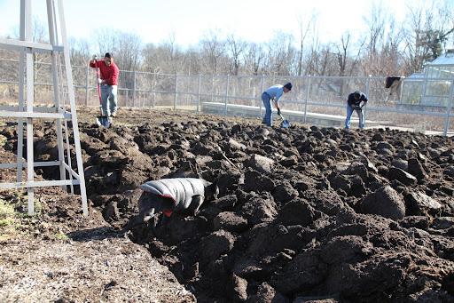 Once that job is done, the digging begins, a process that aerates the soil.  You could even spread a layer of compost first to incorporate more nutrients into the soil.  You can smell that this soil is very nutrient-rich!