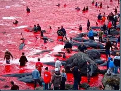 baleias-massacradas-dinamarca