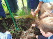 Planting school garden 009.jpg