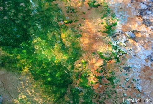 13. algae-kab