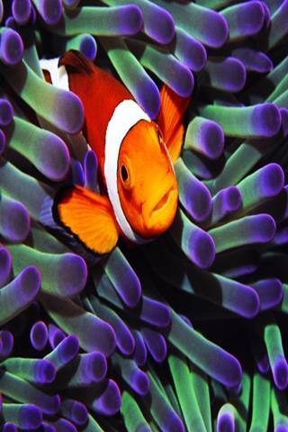 三維可愛的魚 20