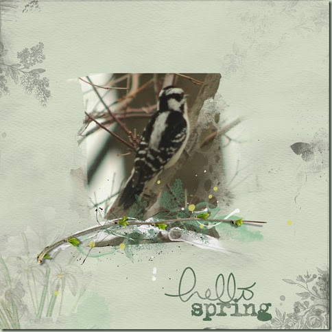 spring woodpecker