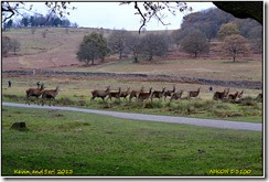 Bradgate Park - Dark day