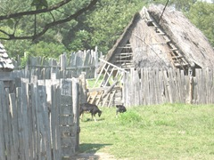 Plimoth Plant houses in need of repair 2 goats