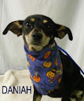 Daniah is from the Houston Humane Society. To learn more about Daniah, click on the link to the shelter below.