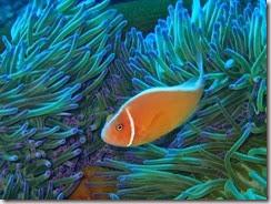 Diving south of Lamen Bay_06 21 14_0054