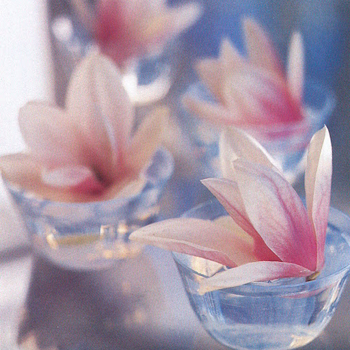 Saucer magnolia blossoms, their stems cut short, float seductively in a parade of glass custard cups, creating an informal centerpiece. (The Best of Martha Stewart Living -- Arranging Flowers)