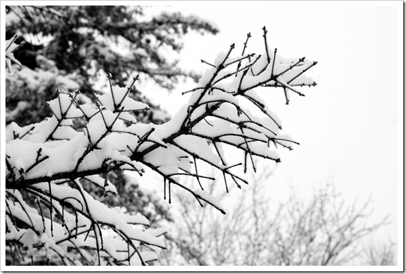 BW Snow 2