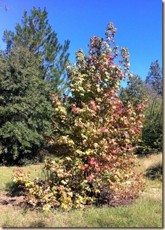 fall color 2011