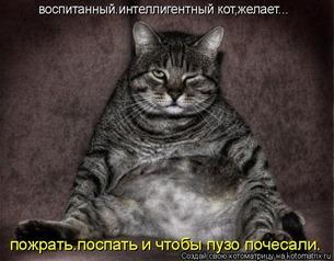 Воспитанный кот