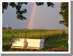 Rainbowhive