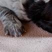 Puppies_Tria-01444.jpg