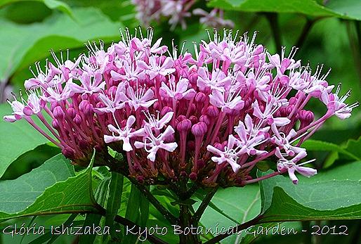 Glória Ishizaka -   Kyoto Botanical Garden 2012 - 78