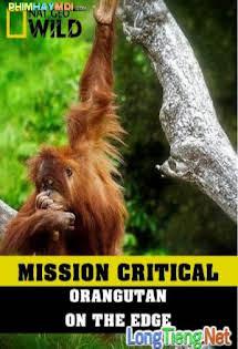 Nhiệm Vụ Cấp Bách: Đười Ươi - Trước Nguy Cơ Tuyệt Chủng - Mission Critical: Orangutan On The Edge
