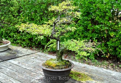 Glória Ishizaka -   Kyoto Botanical Garden 2012 - 51