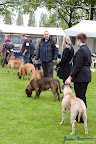 20100513-Bullmastiff-Clubmatch_30989.jpg