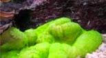 Biodiversité anémone carpette