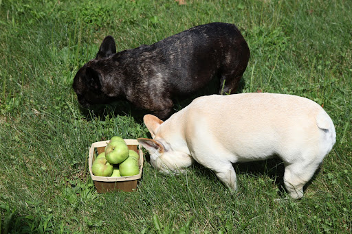 Franny, look at this nice basket of apples.  The donkettes will be so happy!