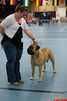 20130510-Bullmastiff-Worldcup-0425.jpg