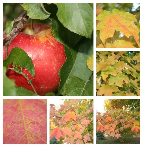 Red Leaf collage