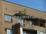 Озеленение_Ужгородски11.jpg