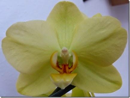2015_04 Orchideen (10)