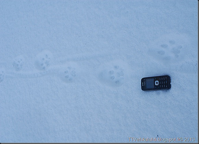 ilves tassujälki lumessa finpyyntie  kimaluskuvia 109