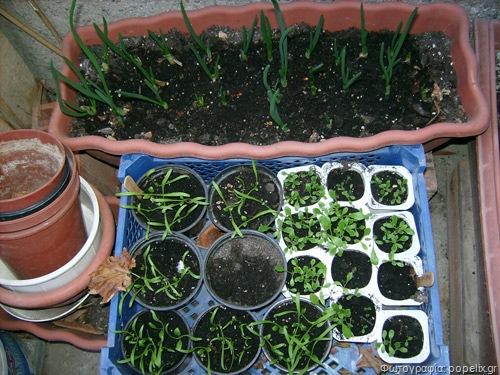 Σεμινάριο με θέμα «Κηπουρική για αρχάριους και ερασιτέχνες» στο ΤΕΙ (5-4-2012)