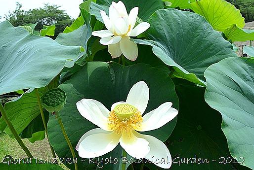 Glória Ishizaka -   Kyoto Botanical Garden 2012 - 72