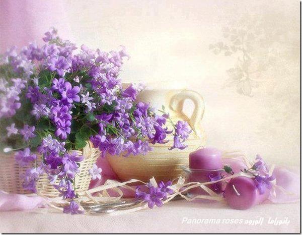 lilas-rosas-flores-facebook-tumblr