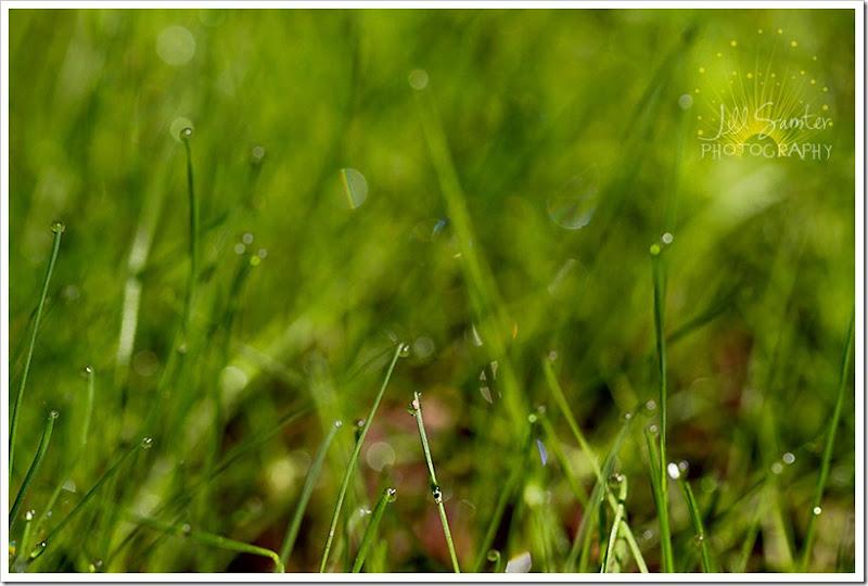 dewdrops-4729