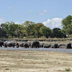 Als Fußgänger ist man mit den Hippos auf Augenhöhe. © Foto: Marco Penzel | Outback Africa Erlebnisreisen