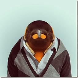 pingüí