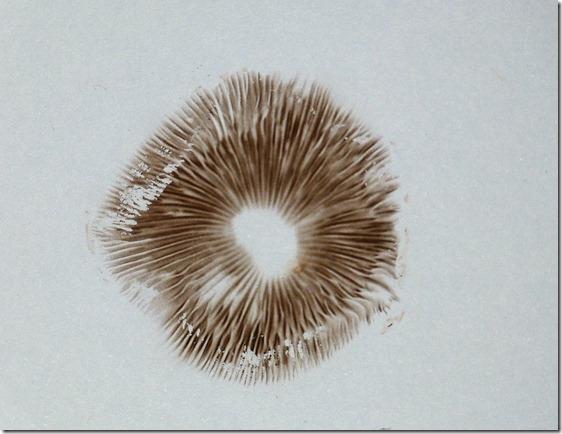 Spore Print 1