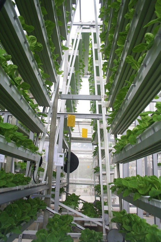 skygreens-vertical-farm-5