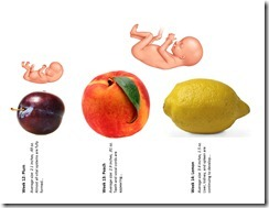 Fetal Size Chart wk12-14