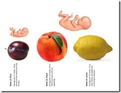 Fetal Size Chart wk12-14